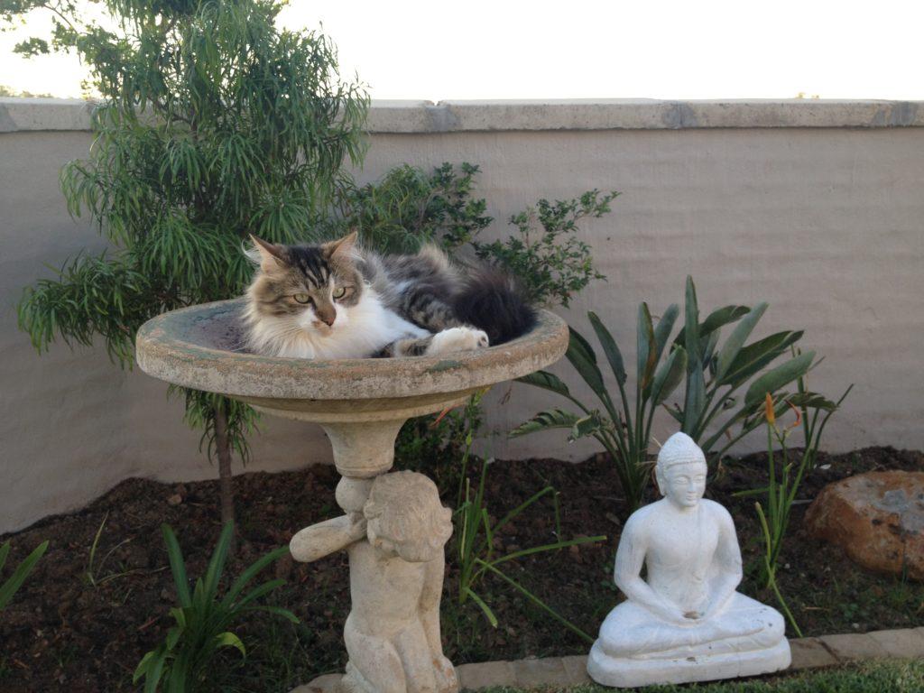 Mark Kahn Cats